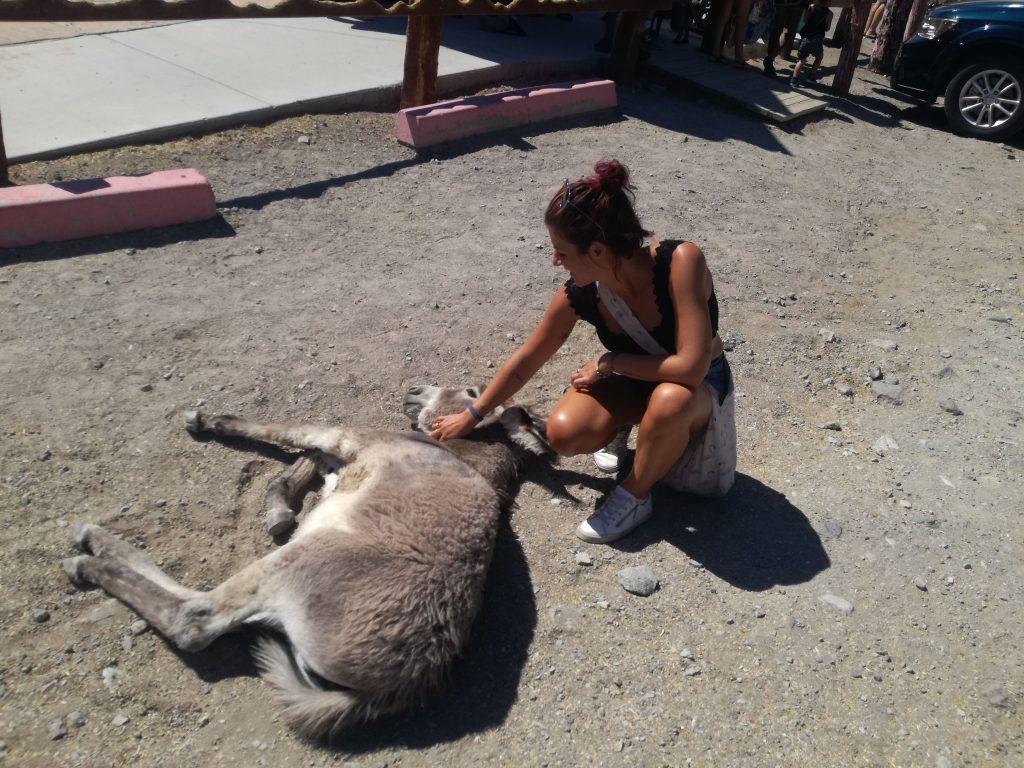 Get your kicks on Route 66  coccole di Simo al Wild burro di Oatman