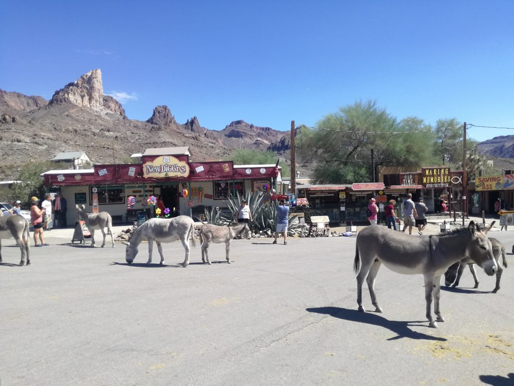 Oatman Ghost Town e i suoi wild burros - Route 66 - Arizona