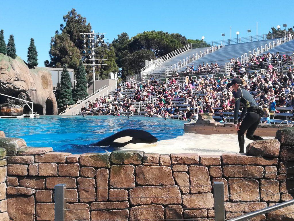 Orca Encounter - Cosa vedere al Seaworld - San Diego