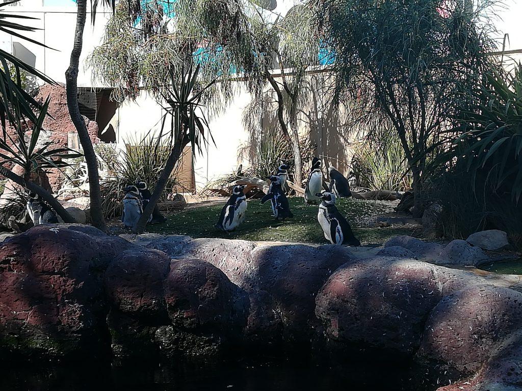 Pinguini al SeaWorld - San Diego