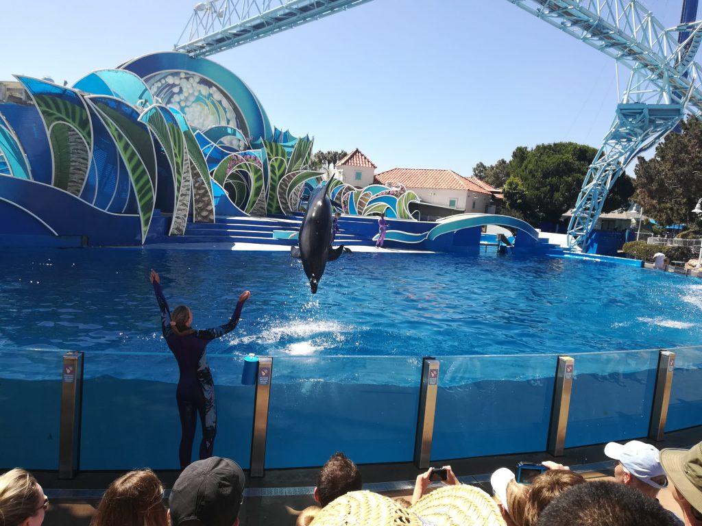 Dolphin Days- Cosa vedere al Seaworld - San Diego