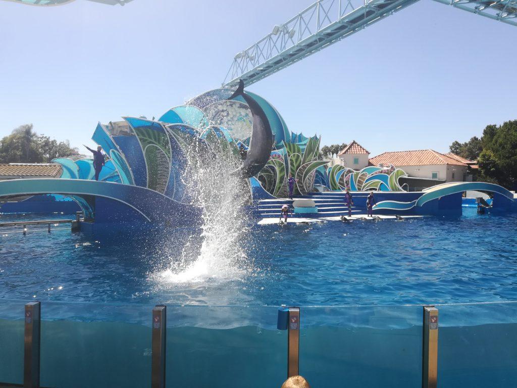 Spettacolo dei delfini - SeaWorld - San Diego