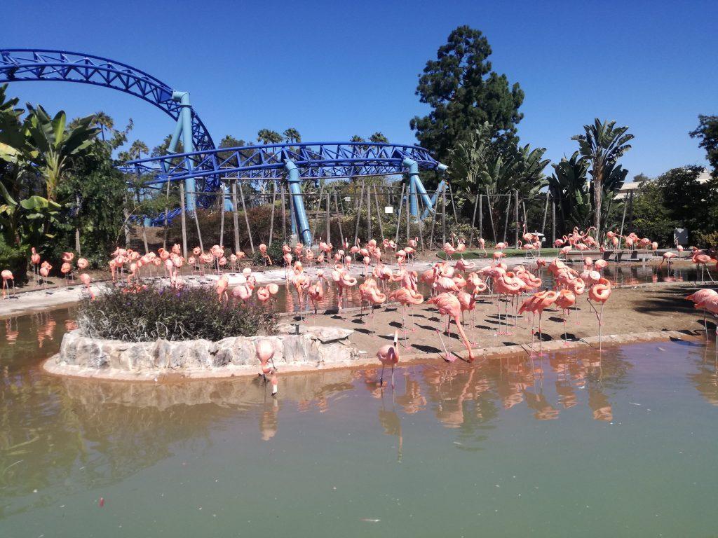 Flamingo Habitat -cosa vedere al  SeaWorld - San Diego