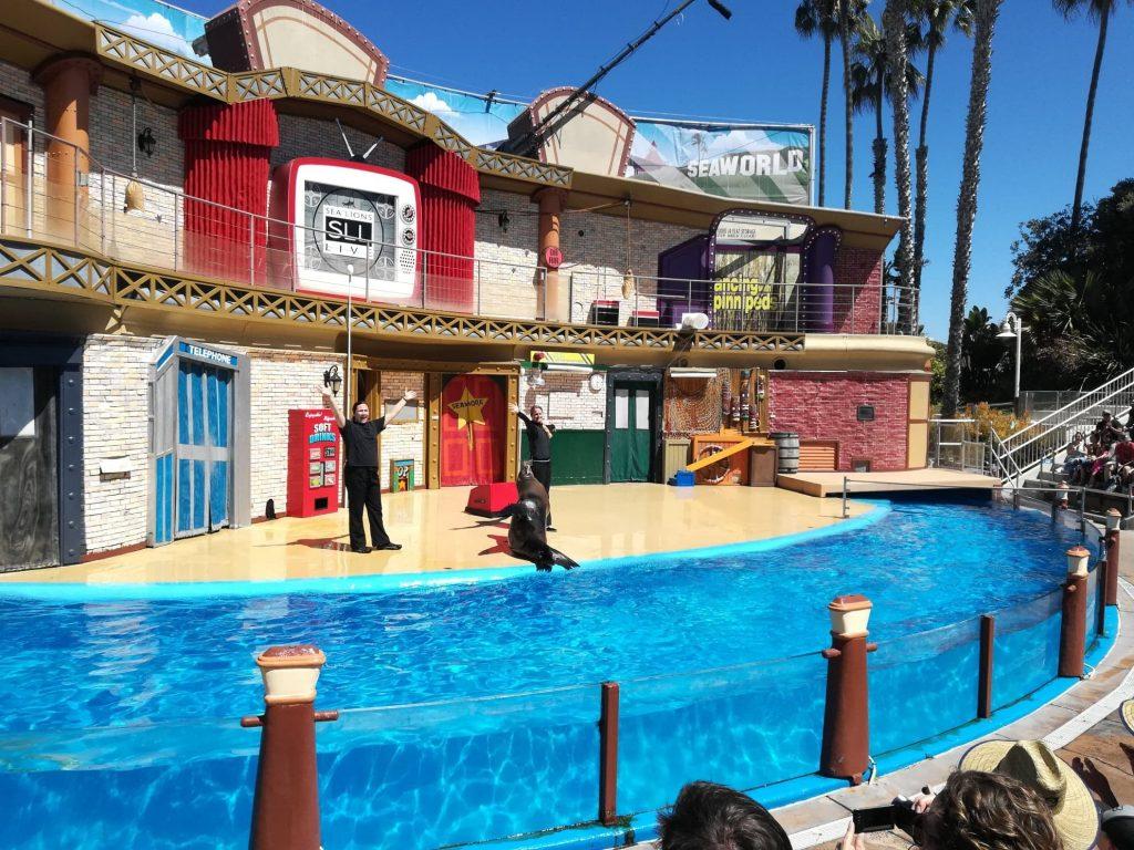 Spettacolo dei leoni marini cosa vedere al SeaWorld di San Diego