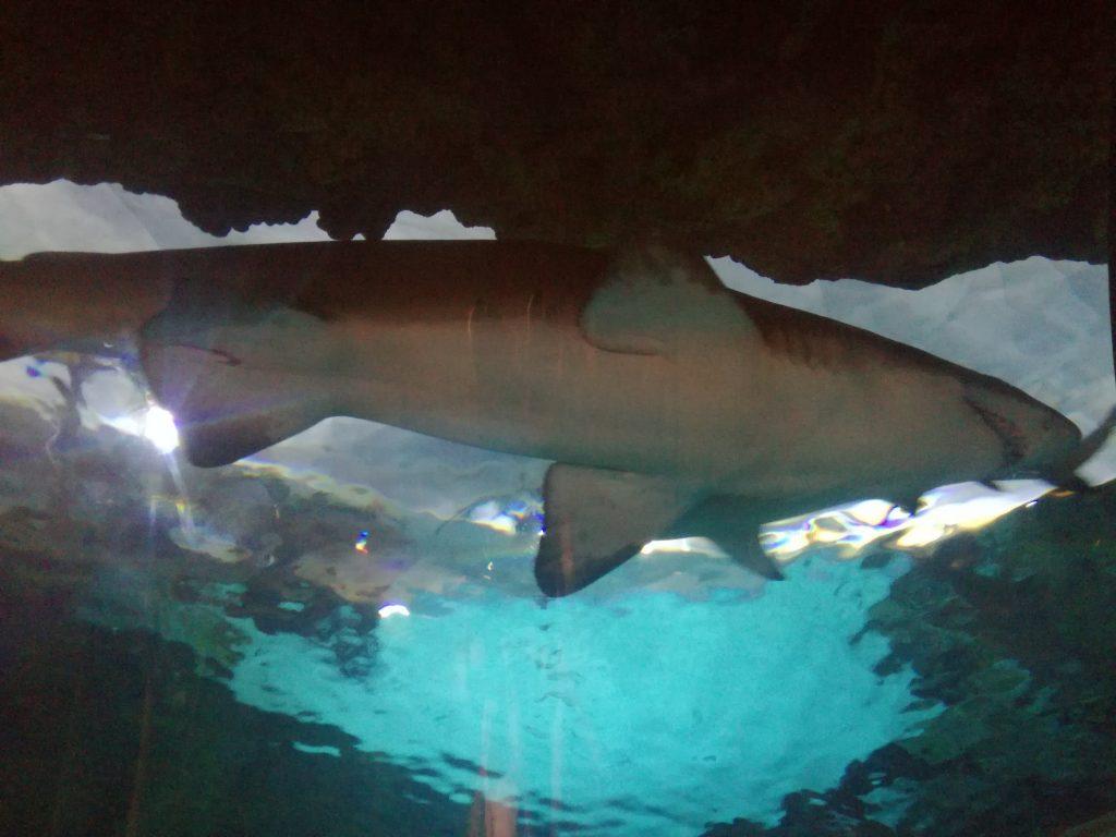 Squalo - Acquario nel SeaWorld San Diego