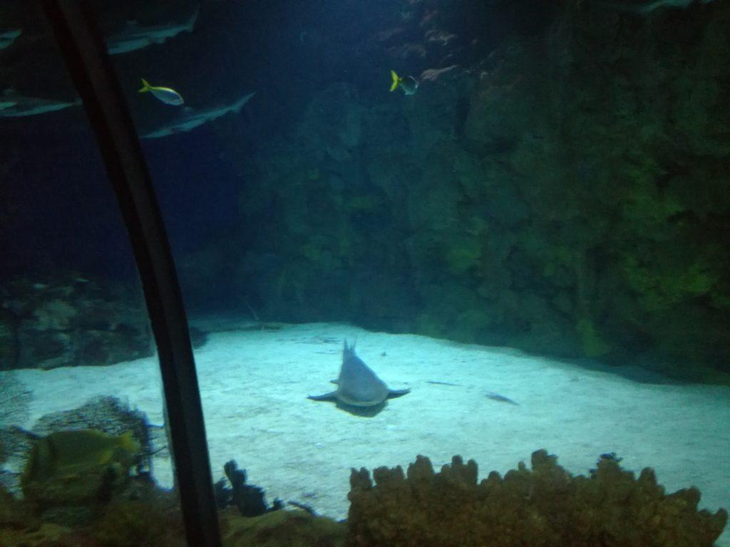 Squali - SeaWorld - San Diego