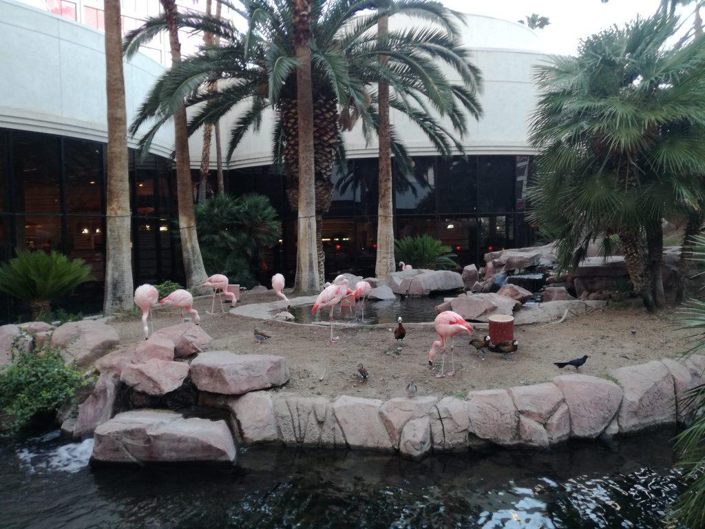 Wildlife Flamingo Habitat - Flamingo Hotel & Casinò - Top 10 attrazioni gratuite a Las Vegas