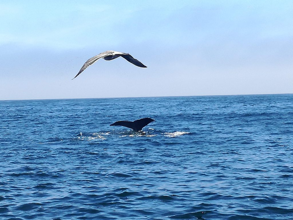 Chris Whale Watching - Monterey
