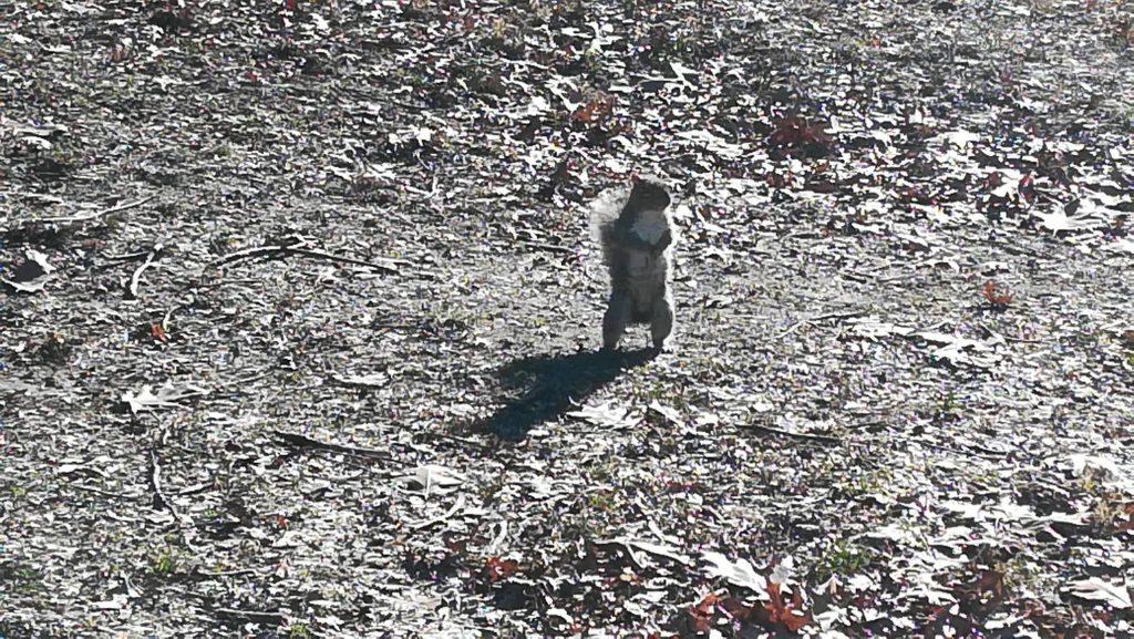 Un simpatico scoiattolo in visita a Central Park Manhattan