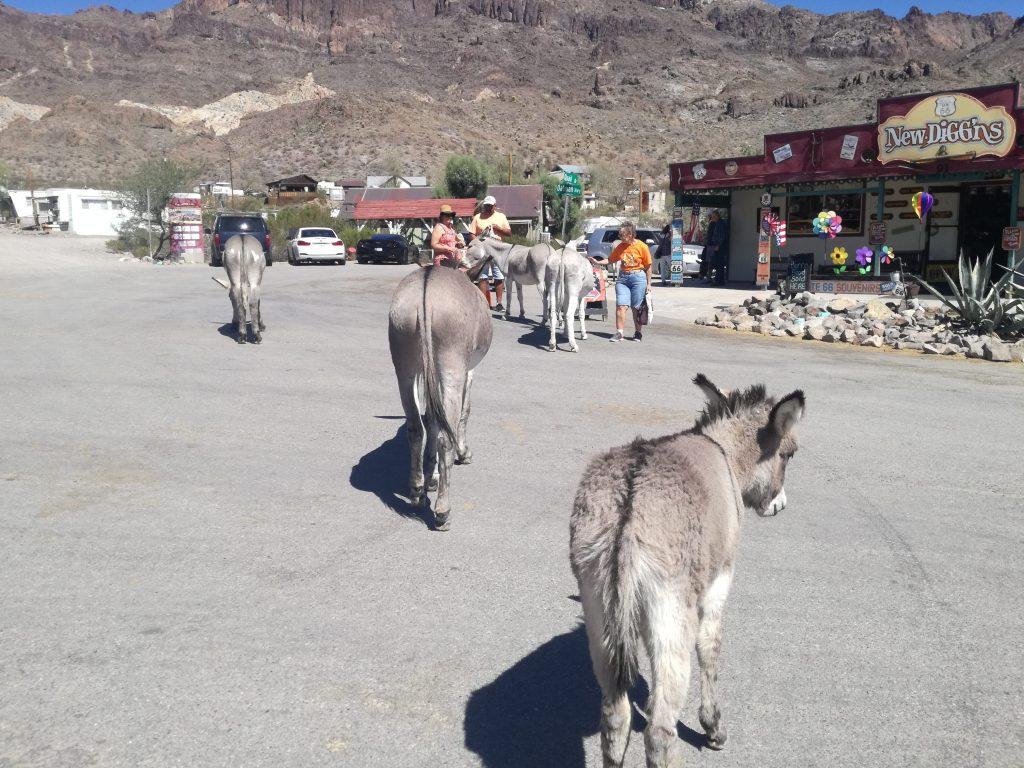 Attrazioni lungo la Route 66 in Arizona - Oatman e i burros