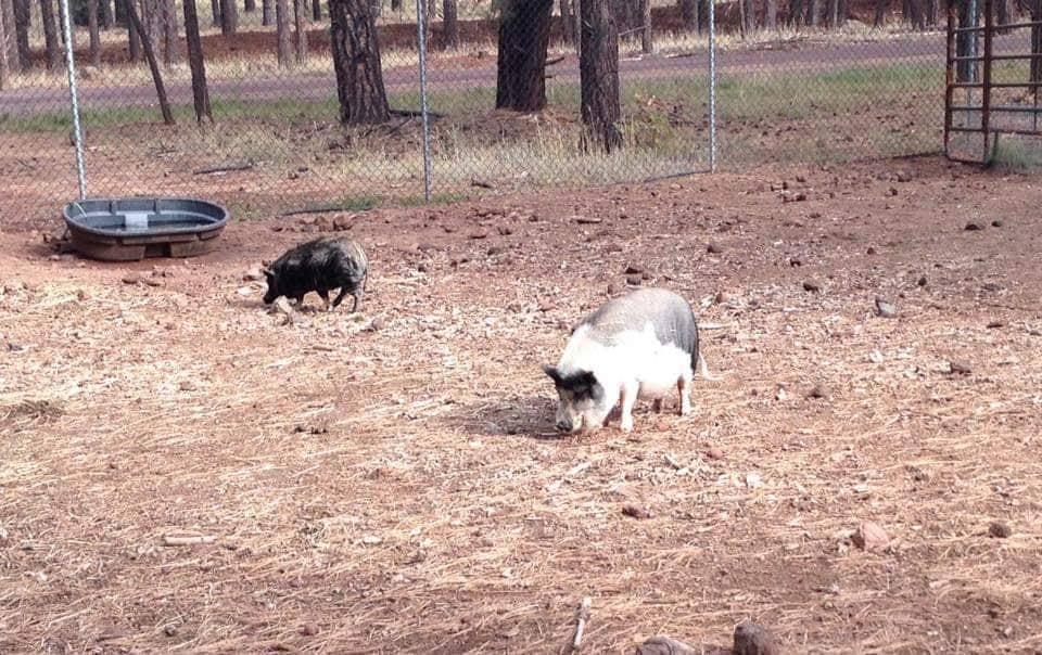 Cougars incontri cuccioli