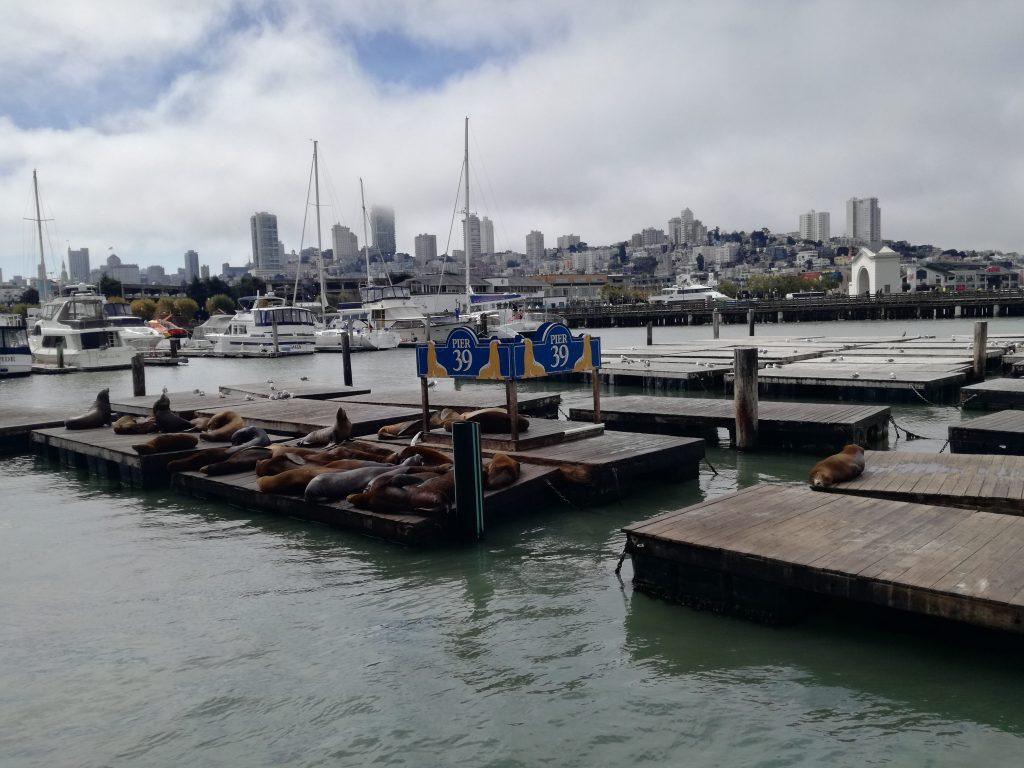 Pier 39 e i leoni marini - San Francisco