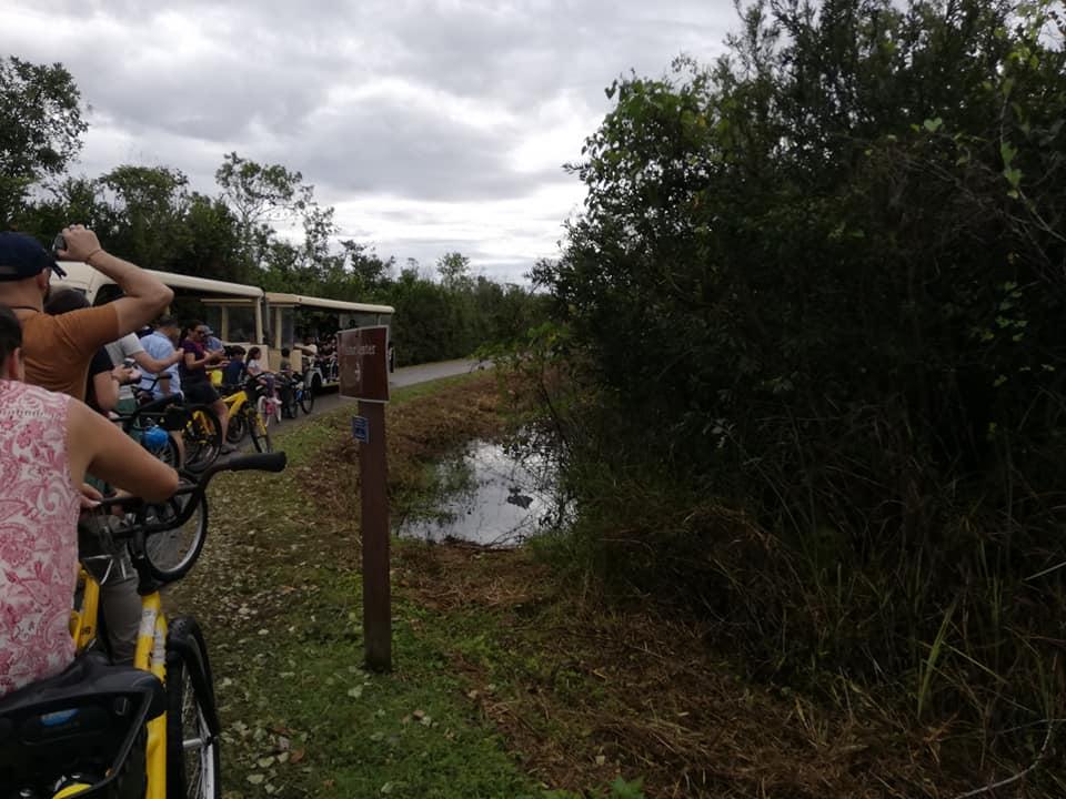 Tram e bici tours nella Shark Valley - Everglades National Park