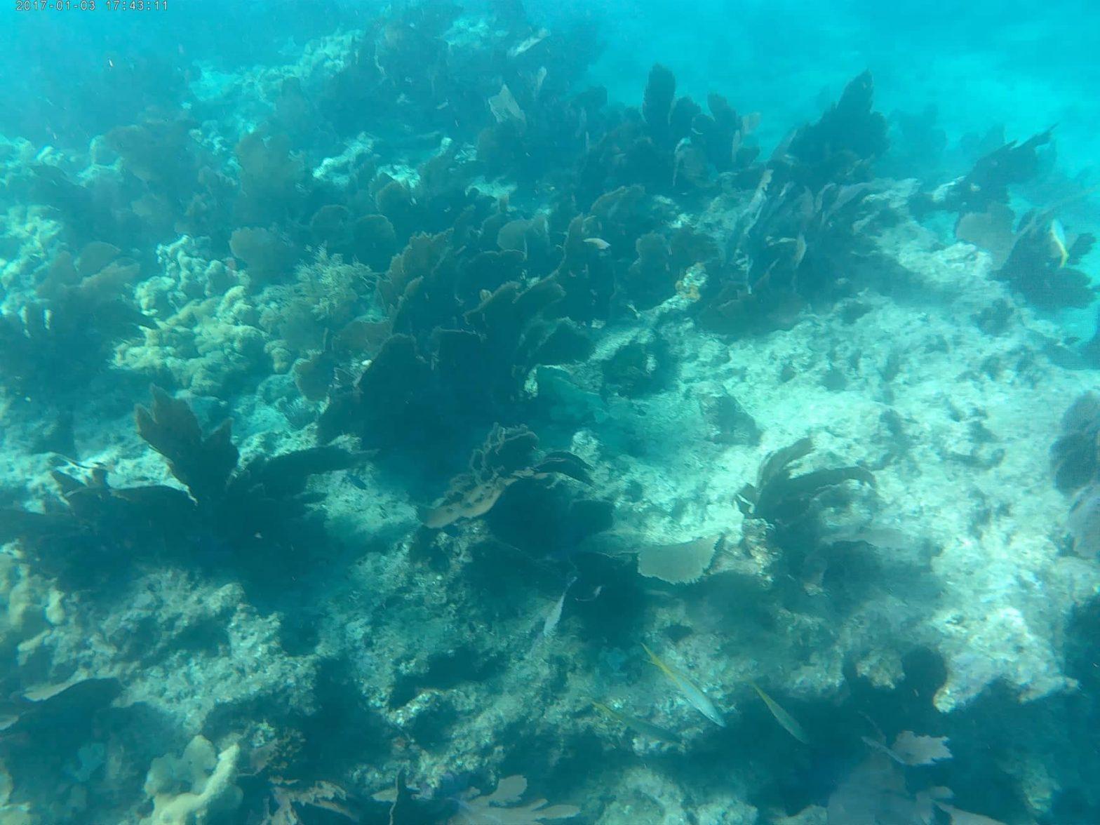 1-prima-volta-snorkeling-Fury-Key-West.-coral-reef