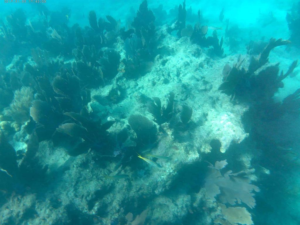 1-prima-volta-snorkeling-Fury-Key-West.-coral-reef-4
