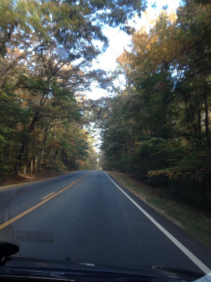 I boschi della Georgia - Potrebbero sbucare zombie da un momento all'altro