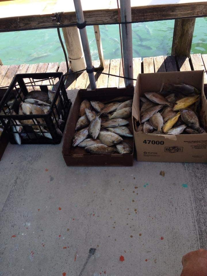 Smistamento dei pesci al rientro dal tour di pesca con Marathon Lady Party Boad - Florida Keys