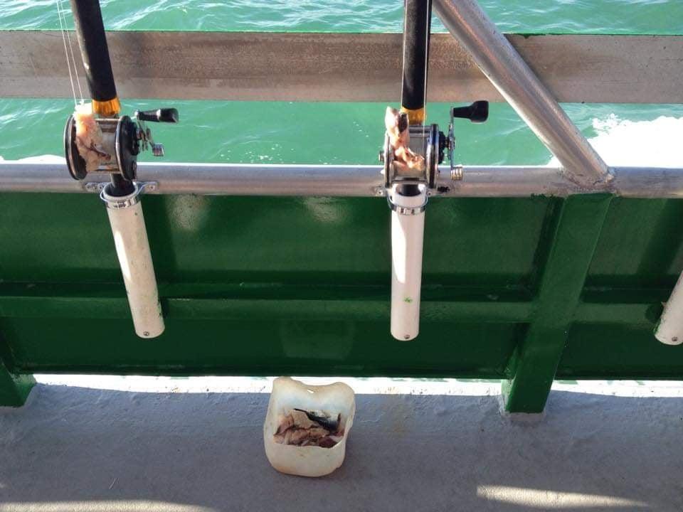 Pesca alle Florida Keys - Esche fornite da Marathon Lady Party Boat