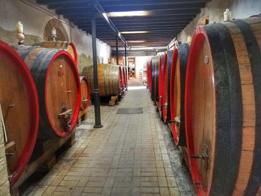 Degustazione in vigna nelle Marche - Bottaia Azienda Agricola Moroder
