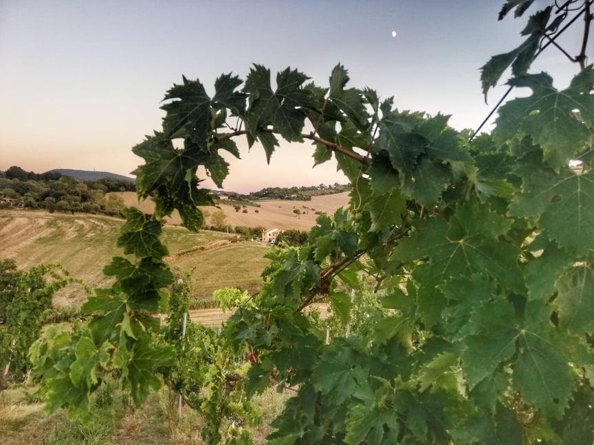Degustazione in vigna nelle Marche - Azienda Agricola Moroder