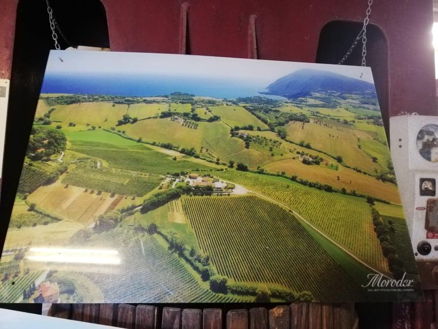 Degustazione in vigna nelle Marche - Possedimenti Azienda Agricola Moroder