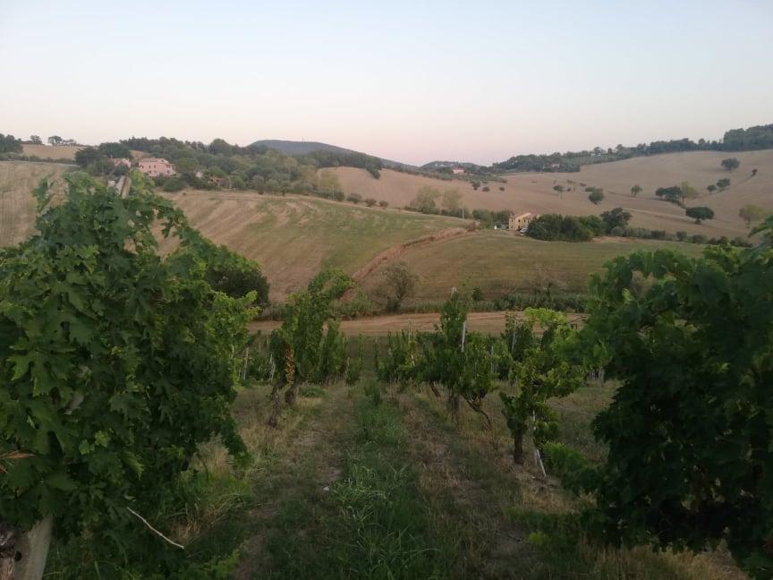 Degustazione-in-vigna-Marche-Moroder-panorama vigneti dorico