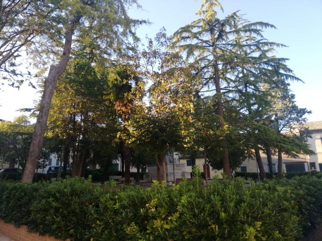 Piazza Barcaroli - cosa vedere a Morro d'Alba