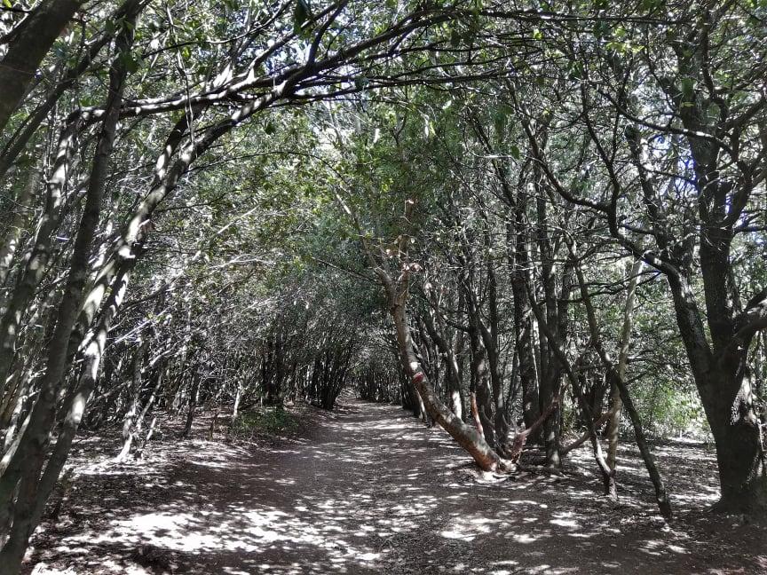 visita Lame Rosse di Fiastra sentiero ombreggiato