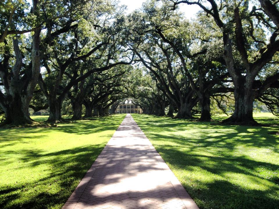 Viale di querce di fronte alla Oak Alley Plantation - tour delle Piantagioni in Louisiana