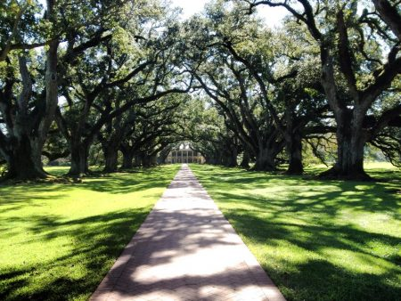 Viale con querce della Virgina Oak Alley Plantation Louisiana