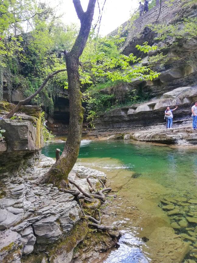 Albero da usare come appoggio per la salita sulle rocce della riva sinistra della Grotta Urlante - premilcuore